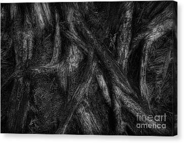 Old Silvery Roots Canvas Print by David Gordon