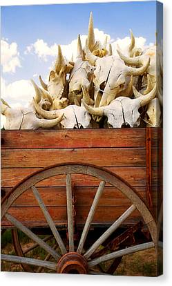 Old Wagon Full Of Buffalo Skulls Canvas Print by Garry Gay