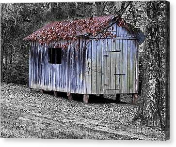 Old Weathered Shed Canvas Print by Betty LaRue