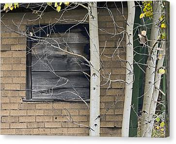Cabin Wall Canvas Print - Old Window And Aspen by James Steele