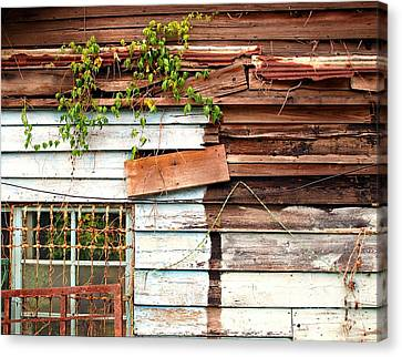Old Wooden Shack Canvas Print by Yali Shi