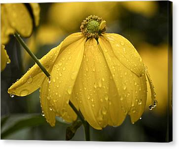 Old Yellow Raincoat Canvas Print by Richard Cummings