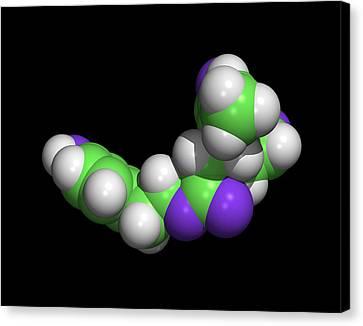 Oleocanthal Olive Oil Molecule Canvas Print by Dr Tim Evans