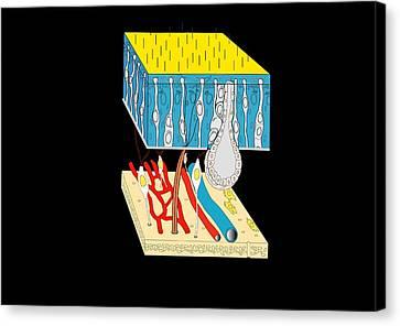 Olfactory Epithelium, Artwork Canvas Print by Francis Leroy, Biocosmos