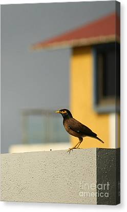 On A Lookout Canvas Print