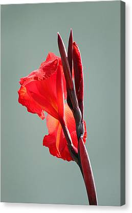 On Fire Canvas Print by Suzanne Gaff