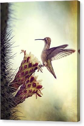On The Edge II  Canvas Print by Saija  Lehtonen