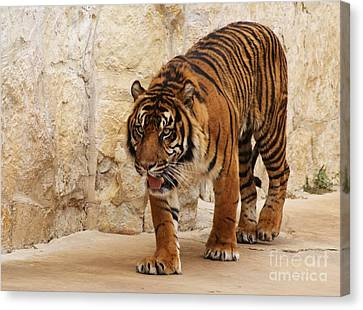 Canvas Print featuring the photograph On The Lookout by Julie Clements