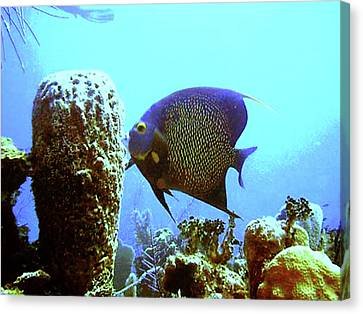 On The Reef Canvas Print by Barry Jones