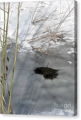 On The River. Heart In Ice 02 Canvas Print by Ausra Huntington nee Paulauskaite