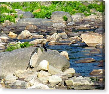 Canvas Print - On The Rock by Randi Shenkman