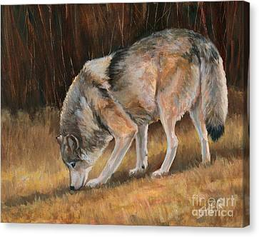 On The Trail - Wolf Canvas Print