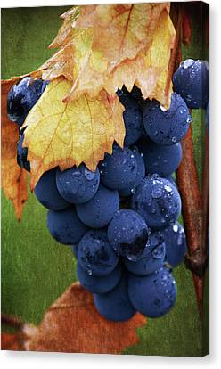 On The Vine Canvas Print by Dale Kincaid