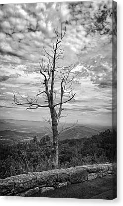 On Top Of The World Canvas Print by Guy Whiteley