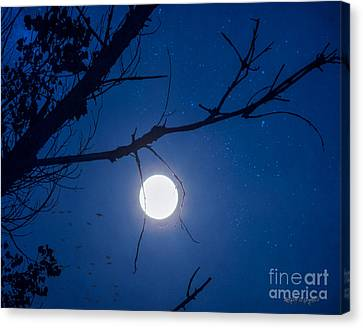 Once In A Blue Moon Canvas Print