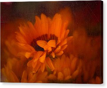 Once Radiant Canvas Print by Lynn Wohlers