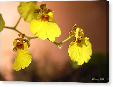Oncidium Goldiana Orchid Canvas Print