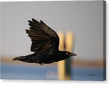 One Black Bird Canvas Print by Roena King