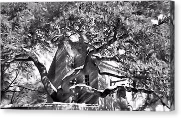 Canvas Print featuring the photograph One Cool Old Tree by Katie Wing Vigil