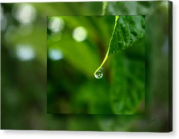 One Drop In The Bigger Picture Canvas Print by Vicki Pelham