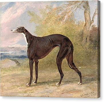 One Of George Lane Fox's Winning  Canvas Print by George Garrard