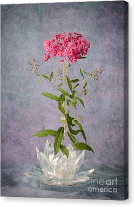 One Stem Canvas Print