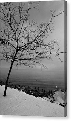 Canvas Print featuring the photograph One Tree Lake by Luis Esteves