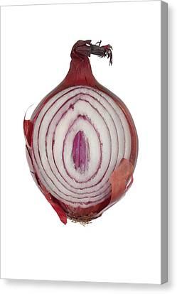 Onion Canvas Print by Frank Tschakert