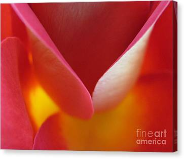 Open Arms Canvas Print