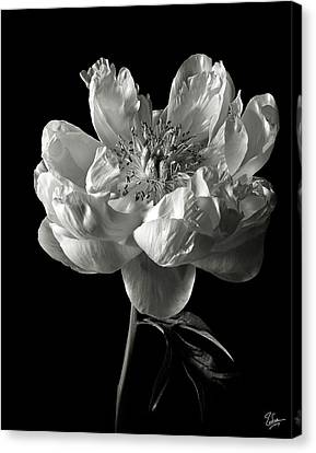 Canvas Print featuring the photograph Open Peony In Black And White by Endre Balogh
