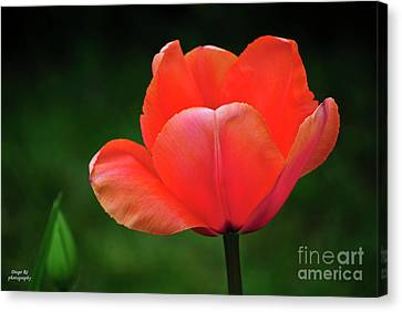 Opened Red Canvas Print by Diego Re