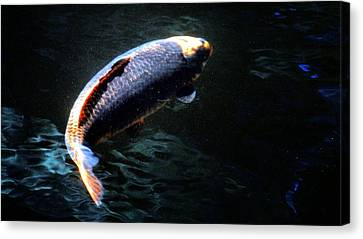 Optical Koi Llusion Canvas Print by Don Mann