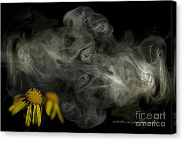 Optimisticly Dense Daisies Canvas Print by Vicki Ferrari Photography