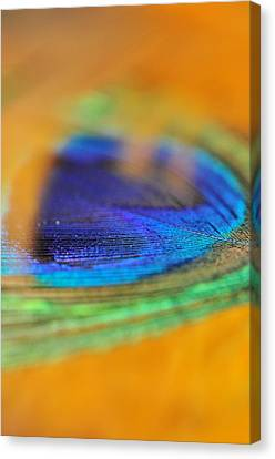 Orange And Blue Feather Canvas Print