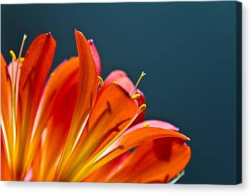 Orange And Blue Canvas Print by Justin Albrecht