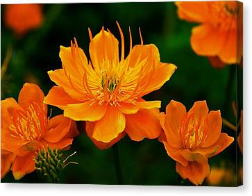 Orange And Yellow Canvas Print by Eric Tressler