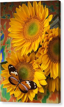 Orange Black Butterfly And Sunflowers Canvas Print by Garry Gay
