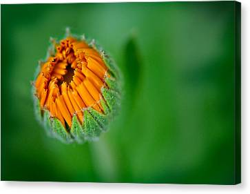 Orange Bloom Canvas Print