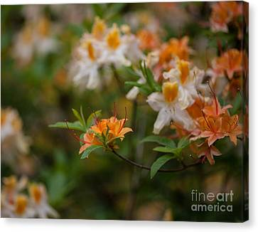 Orange Brilliance Canvas Print by Mike Reid