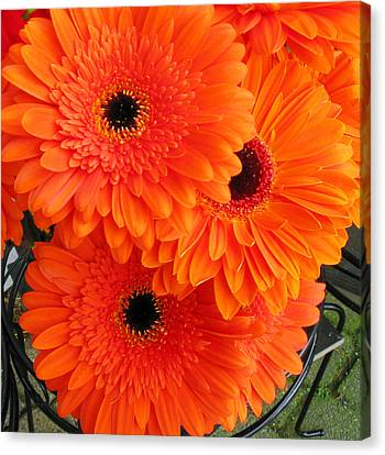 Orange Burst Canvas Print