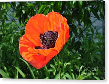 Orange Burst Canvas Print by Luke Moore