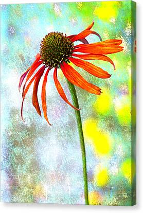 Orange Coneflower On Green And Yellow Canvas Print by Carol Leigh