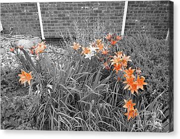 Orange Day Lilies. Canvas Print by Ausra Huntington nee Paulauskaite