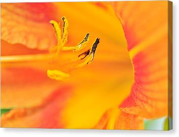 Canvas Print featuring the photograph Orange Daylily  by Puzzles Shum