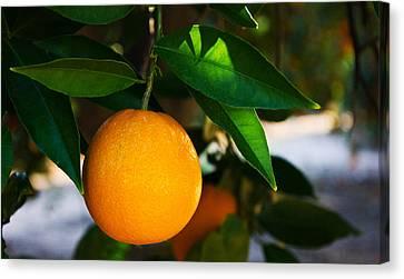 Orange Canvas Print