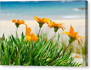 Orange Flowers On The Sunny Ocean Beach. Canvas Print