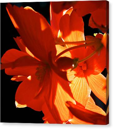 Canvas Print featuring the photograph Orange Glow by Trever Miller