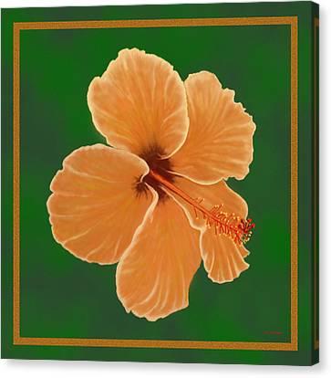 Orange Hibiscus Canvas Print by Tim Stringer