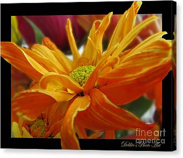 Canvas Print featuring the photograph Orange Juice Daisy by Debbie Portwood