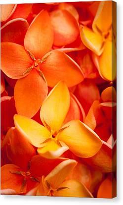 Orange Jungle Flame Flower Canvas Print by Johan Larson